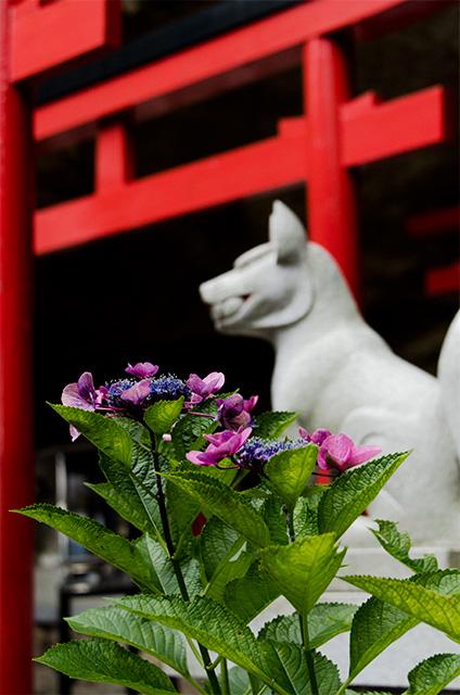 wakayama006.jpg