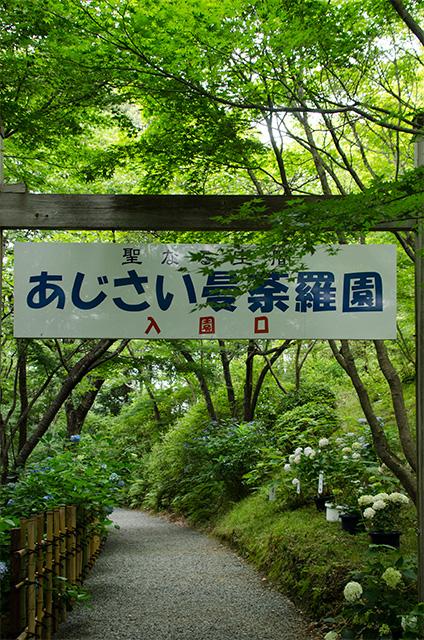 wakayama04.jpg